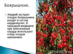 Боярышник. Жидкий экстракт плодов боярышника входит в состав кардиовален. В наро
