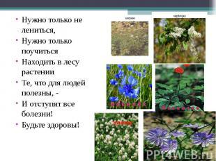 Нужно только не лениться,Нужно только поучитьсяНаходить в лесу растенииТе, что д