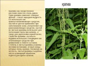Крапива как лекарственное растение известно очень давно. Одна крапива заменяет с
