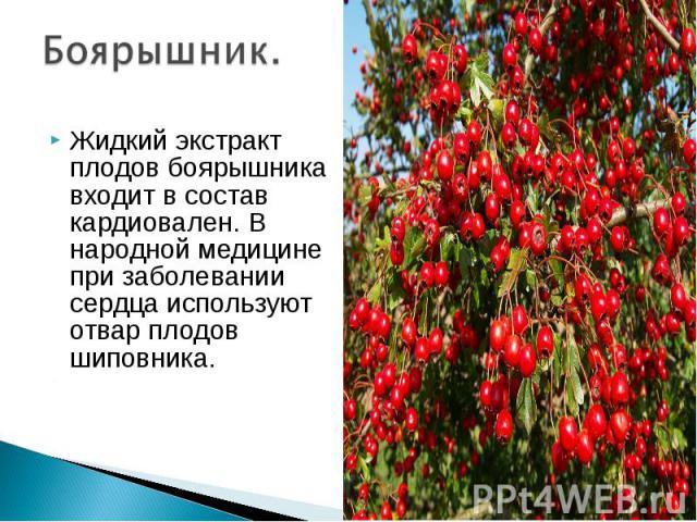 Боярышник. Жидкий экстракт плодов боярышника входит в состав кардиовален. В народной медицине при заболевании сердца используют отвар плодов шиповника.
