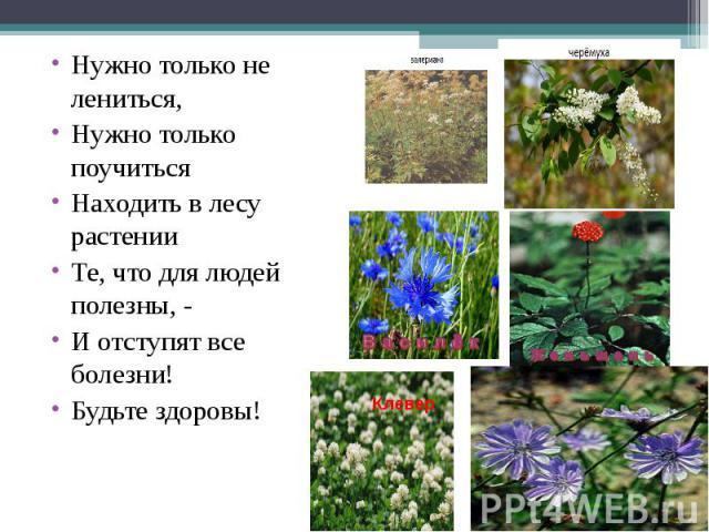 Нужно только не лениться,Нужно только поучитьсяНаходить в лесу растенииТе, что для людей полезны, -И отступят все болезни!Будьте здоровы!