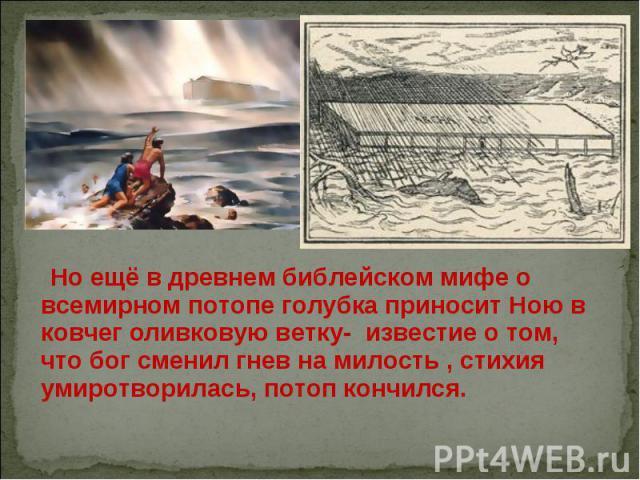 Но ещё в древнем библейском мифе о всемирном потопе голубка приносит Ною в ковчег оливковую ветку- известие о том, что бог сменил гнев на милость , стихия умиротворилась, потоп кончился.