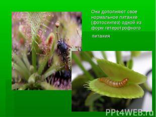 Они дополняют свое нормальноепитание (фотосинтез) одной из формгетеротрофного