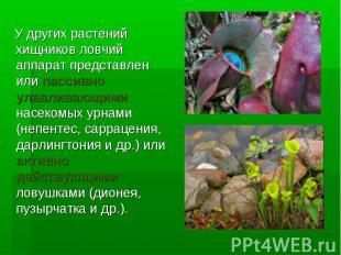 У других растений хищников ловчий аппарат представлен или пассивно улавливающими