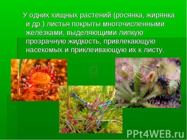 У одних хищных растений (росянка, жирянка и др.) листья покрыты многочисленными желёзками, выделяющими липкую прозрачную жидкость, привлекающую насекомых и приклеивающую их к листу.