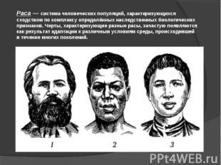 Раса — система человеческих популяций, характеризующихся сходством по комплексу