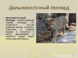 Дальневосточный леопард Дальневосточный леопард - самый северный подвид леопарда