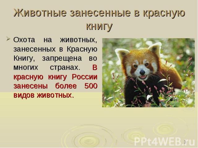 Животные занесенные в красную книгу Охота на животных, занесенных в Красную Книгу, запрещена во многих странах. В красную книгу России занесены более 500 видов животных.