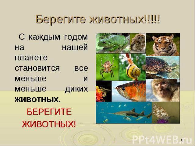 Берегите животных!!!!! С каждым годом на нашей планете становится все меньше и меньше диких животных. БЕРЕГИТЕ ЖИВОТНЫХ!