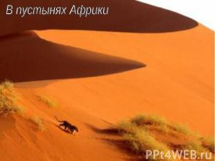 В пустынях Африки