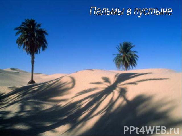 Пальмы в пустыне