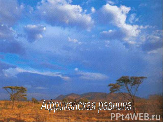 Африканская равнина