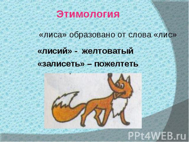 Этимология«лиса» образовано от слова «лис»«лисий» - желтоватый «залисеть» – пожелтеть