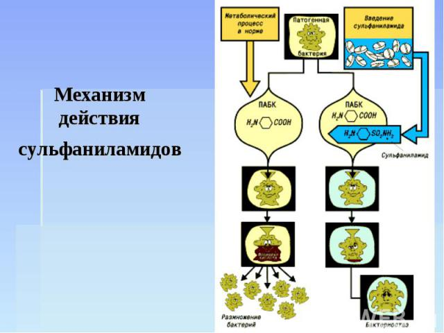 Механизм действия сульфаниламидов