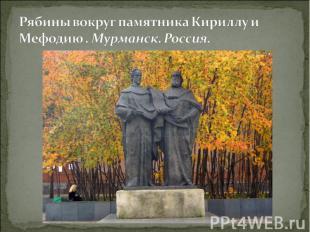 Рябины вокруг памятника Кириллу и Мефодию . Мурманск. Россия.