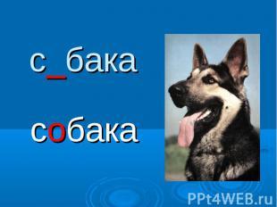 с_бакасобака