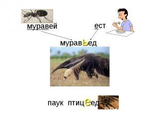 муравьедмуравейестпаук птицеед