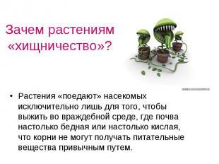 Зачем растениям «хищничество»? Растения «поедают» насекомых исключительно лишь д