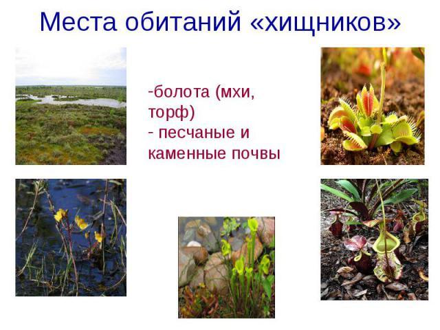 Места обитаний «хищников» болота (мхи, торф) песчаные и каменные почвы