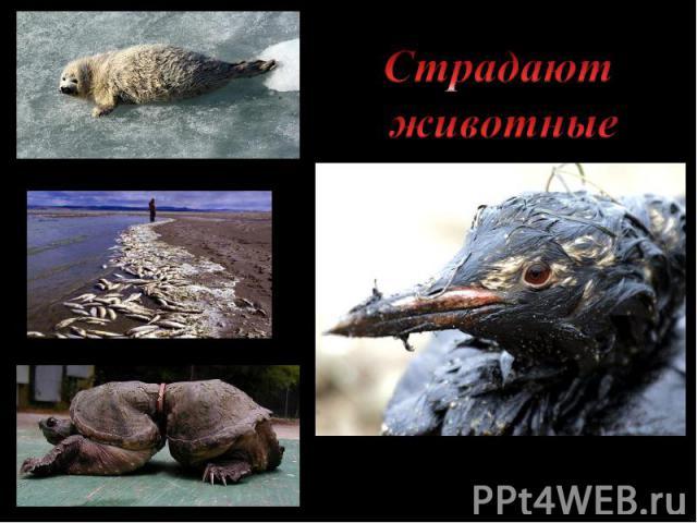 Страдают животные