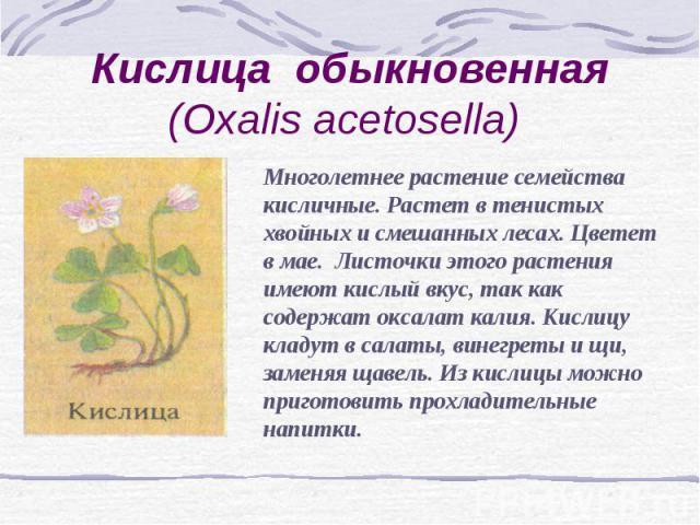 Кислица обыкновенная (Oxalis acetosella) Многолетнее растение семейства кисличные. Растет в тенистых хвойных и смешанных лесах. Цветет в мае. Листочки этого растения имеют кислый вкус, так как содержат оксалат калия. Кислицу кладут в салаты, винегре…