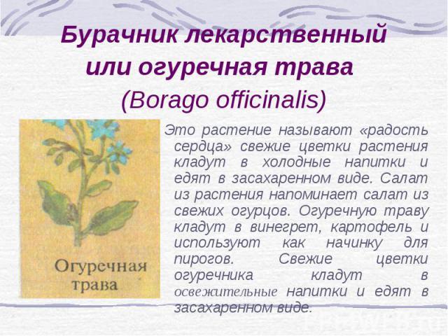 Бурачник лекарственный или огуречная трава (Borago officinalis) Это растение называют «радость сердца» свежие цветки растения кладут в холодные напитки и едят в засахаренном виде. Салат из растения напоминает салат из свежих огурцов. Огуречную траву…
