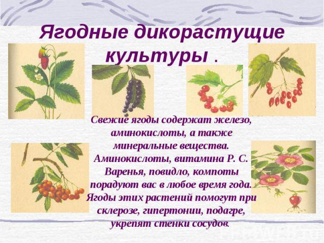 Ягодные дикорастущие культуры . Свежие ягоды содержат железо, аминокислоты, а также минеральные вещества. Аминокислоты, витамина Р. С. Варенья, повидло, компоты порадуют вас в любое время года. Ягоды этих растений помогут при склерозе, гипертонии, п…