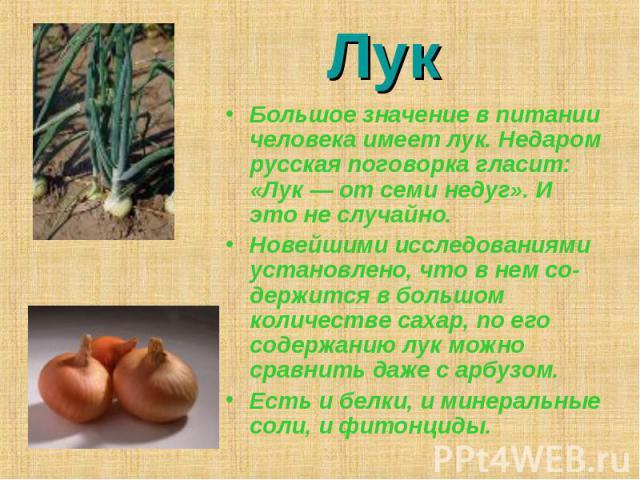 Лук Большое значение в питании человека имеет лук. Недаром русская поговорка гласит: «Лук — от семи недуг». И это не случайно. Новейшими исследованиями установлено, что в нем содержится в большом количестве сахар, по его содержанию лук можно сравнит…