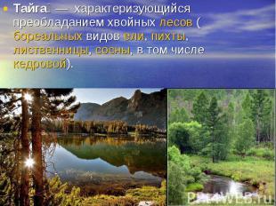 Тайга— характеризующийся преобладанием хвойных лесов (бореальных видов ели, пих