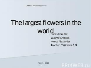 Alikovo secondary school The largest flowers in the world Pupils from 9b:Yakovle