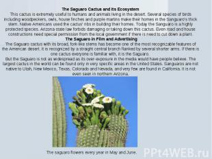 The Saguaro Cactus and Its EcosystemThis cactus is extremely useful to humans an