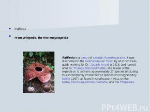 RafflesiaFrom Wikipedia, the free encyclopedia Rafflesia is a genus of parasitic