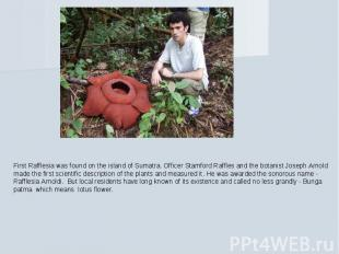 First Rafflesia was found on the island of Sumatra. Officer Stamford Raffles and