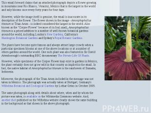 This email forward claims that an attached photograph depicts a flower growing i