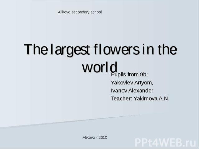 Alikovo secondary school The largest flowers in the world Pupils from 9b:Yakovlev Artyom,Ivanov AlexanderTeacher: Yakimova A.N.