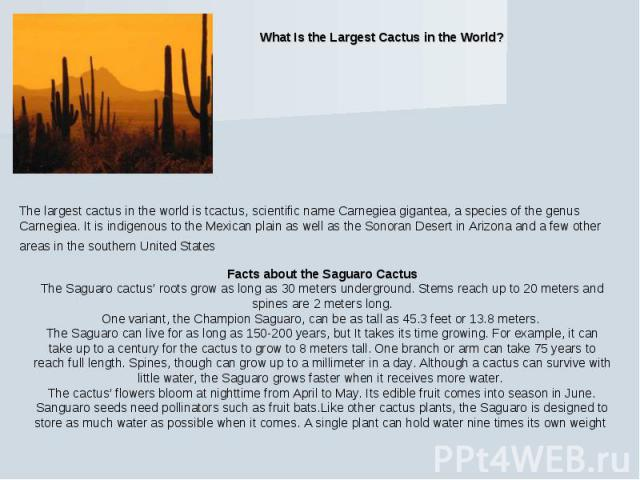 What Is the Largest Cactus in the World? The largest cactus in the world is tcactus, scientific name Carnegiea gigantea, a species of the genus Carnegiea. It is indigenous to the Mexican plain as well as the Sonoran Desert in Arizona and a few other…