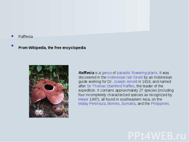 RafflesiaFrom Wikipedia, the free encyclopedia Rafflesia is a genus of parasitic flowering plants. It was discovered in the Indonesian rain forest by an Indonesian guide working for Dr. Joseph Arnold in 1818, and named after Sir Thomas Stamford Raff…