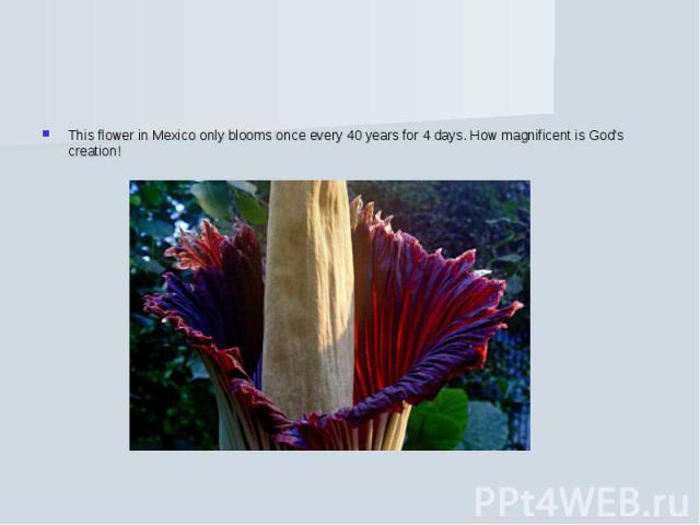 This flower in Mexico only blooms once every 40 years for 4 days. How magnificent is God's creation!