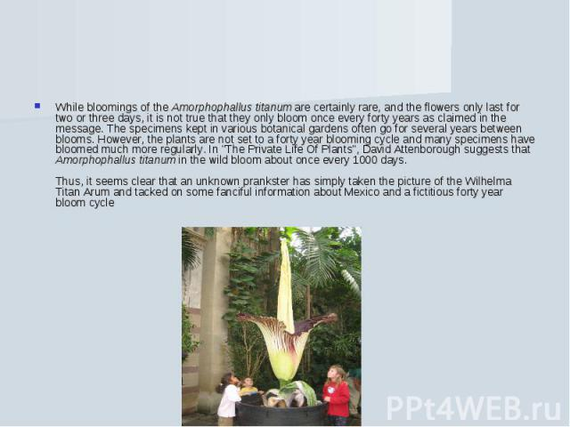 While bloomings of the Amorphophallus titanum are certainly rare, and the flowers only last for two or three days, it is not true that they only bloom once every forty years as claimed in the message. The specimens kept in various botanical gardens …