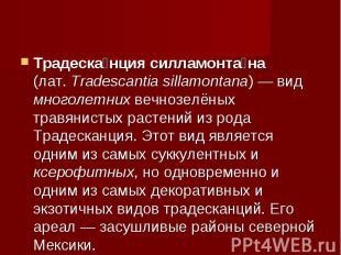 Традесканция силламонтана (лат.Tradescantia sillamontana)— вид многолетних веч