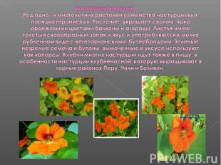 Настурция (капуцин)Род одно- и многолетних растений семейства настурциевых поряд