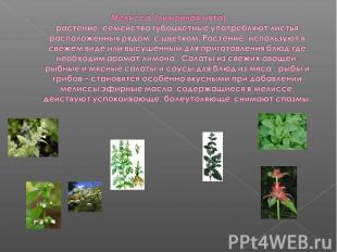 Мелисса (лимонная мята)растение семейства губоцветные употребляют листья располо
