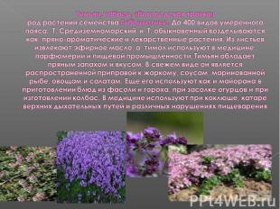 Тимьян, чабрец, «богородская травка»род растений семейства Губоцветные. До 400 в
