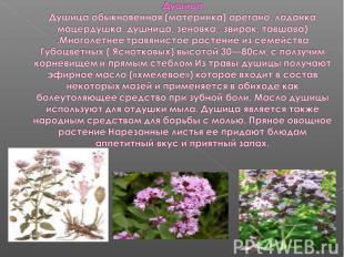 Душица Душица обыкновенная (материнка) орегано, ладанка, мацердушка, душница, зе
