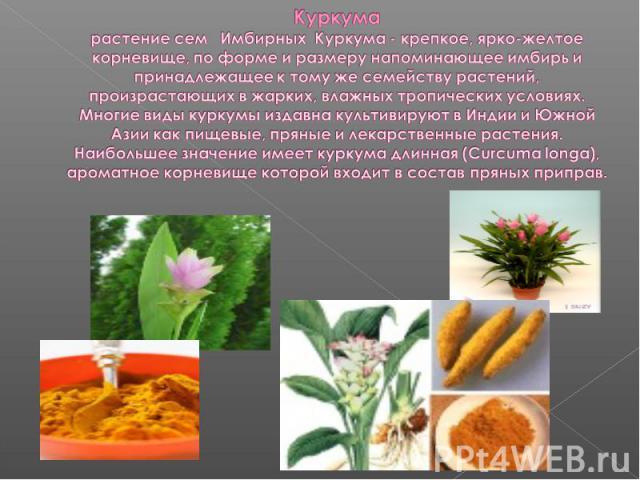 Где растет куркума в россии