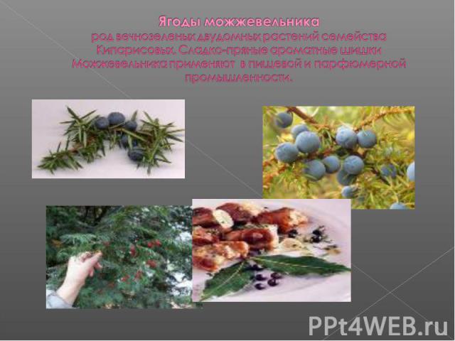 Ягоды можжевельникарод вечнозеленых двудомных растений семейства Кипарисовых. Сладко-пряные ароматные шишки Можжевельника применяют в пищевой и парфюмерной промышленности.