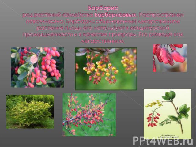 Барбарисрод растений семейства Барбарисовых. Распространен повсеместно. Барбарис обыкновенный лекарственное растение,плоды его используют в кондитерской промышленности и в качестве приправы. Его разводят как лекарственное.