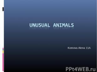 Unusual animals Komova Alena 11A