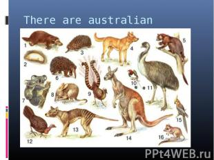 There are australian animals.