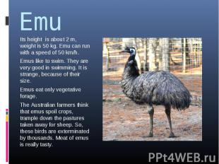 Emu Its height is about 2 m, weight is 50 kg. Emu can run with a speed of 50 km/